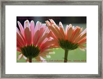 Isaiah 40 8 Gerber Daisies Framed Print by Lisa Wooten