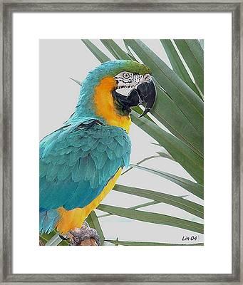 Islamorada Parrot - Of The Macaw Persuasion Framed Print by Lin Grosvenor