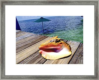 Island Conch Framed Print