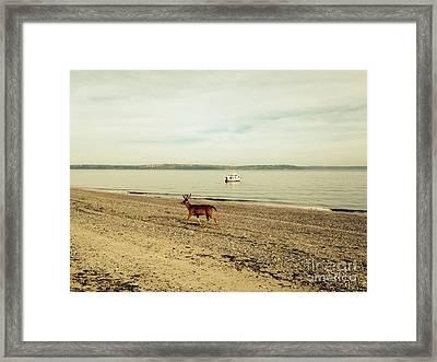 Island Deer Framed Print