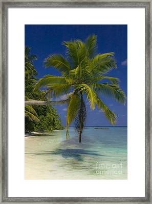 Island Dream Framed Print