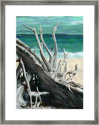 Island Driftwood Framed Print by Dennis Orlando