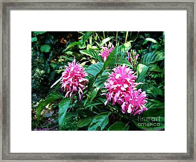 Framed Print featuring the photograph Island Flower by Leanne Seymour