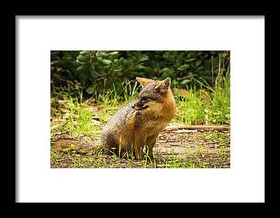 Santa Cruz Island Framed Prints