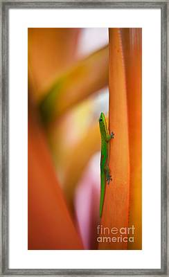 Island Friend Framed Print by Mike Reid