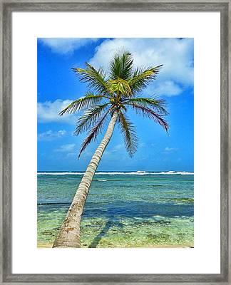 Island Palm Tree In San Blas Islands Framed Print by Michelle Eshleman