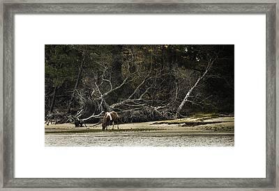 Island Pony Framed Print
