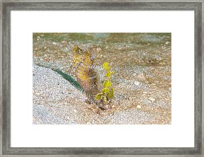 Island Seahorse Framed Print