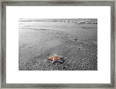 Island Star Framed Print