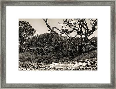 Island Trees Framed Print