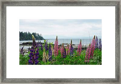 Island View Framed Print by Christopher Mace