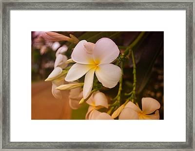 Framed Print featuring the photograph Isle De Java by Miguel Winterpacht