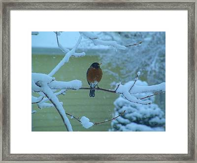 Isn't It Spring Yet? Framed Print