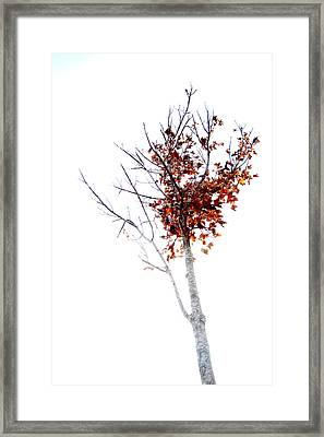 Isolate Framed Print by James Whitworth