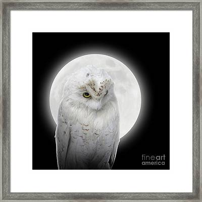 Isolated White Owl In Night With Moon Framed Print by Angela Waye