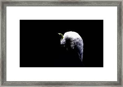 Isolation Framed Print by John Monteath