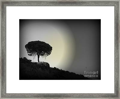 Framed Print featuring the photograph Isolation Tree by Clare Bevan