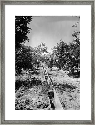Israel Irrigation, C1937 Framed Print by Granger