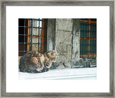 Istanbul Cat Framed Print by Cheryl Del Toro