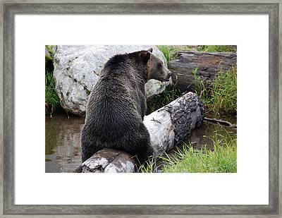 It Ain't What It May Look Like Framed Print