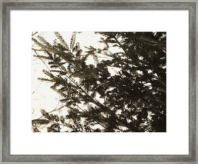Framed Print featuring the photograph It Feels Like Winter... by Zinvolle Art