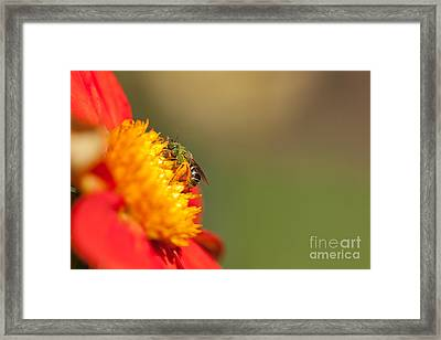 It Is All About The Buzz Framed Print by Beve Brown-Clark Photography