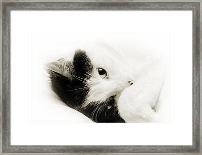 It Is Hard To Be So Cute Framed Print