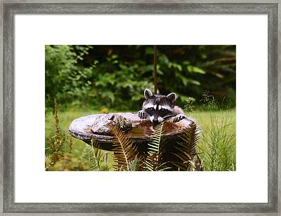 It Is Not Just For The Birds Framed Print by Kym Backland