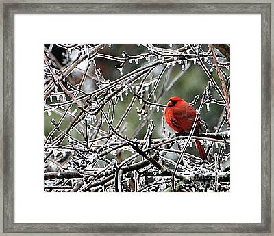It Is So Cold Framed Print