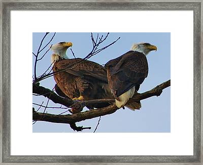 It Is Your Turn To Get Dinner Framed Print by Bruce Bley