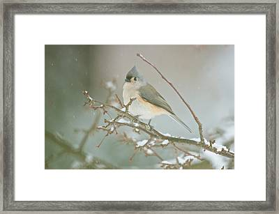 It May Be Cold But I Still Have My Looks Framed Print