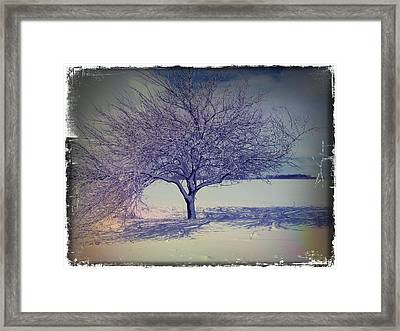 It Might Be An Apple Tree Framed Print by Scott Kingery