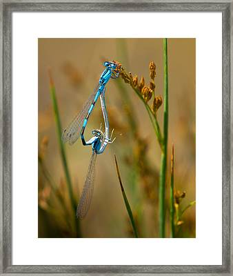 It Must Be Love Framed Print by Janis Knight