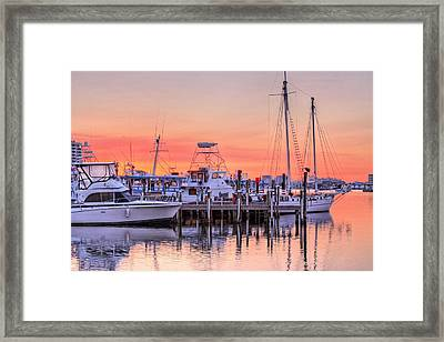 It Takes All Kinds In Destin Framed Print by JC Findley