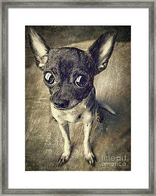 It Wasn't Me Framed Print by Billie-Jo Miller