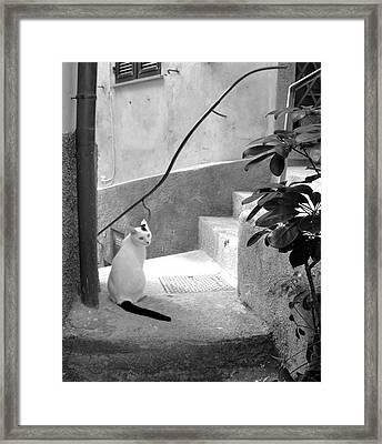Italian Charmer Framed Print by Corinne Rhode