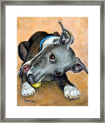 Italian Greyhound With Ball Framed Print by Dottie Dracos