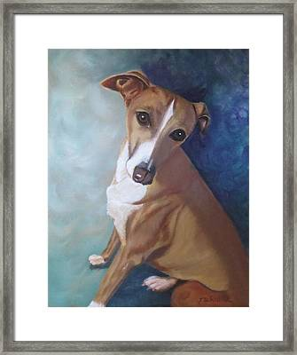 Framed Print featuring the painting Italian Greyhound by Sharon Schultz