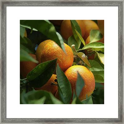 Framed Print featuring the photograph Italian Oranges by Michael Flood