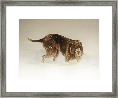 Italian Spinone In The Snow Framed Print