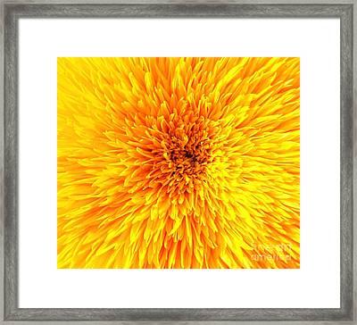 Italian Sunflower Detail Framed Print by C Lythgo