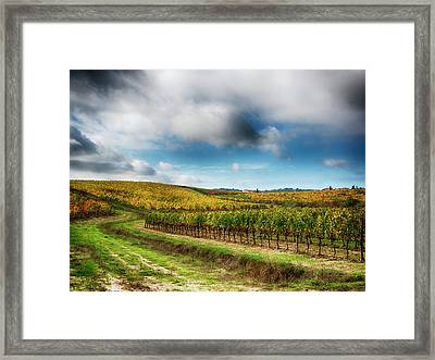 Italy, Montepulciano, Autumn Vineyard Framed Print