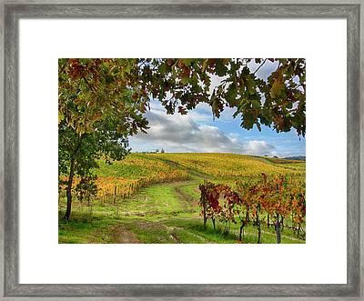 Italy, Montepulciano, Autumn Vineyards Framed Print