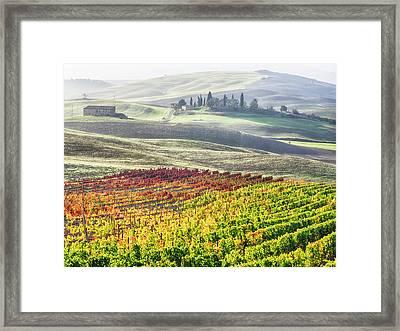 Italy, San Quirico, Autumn Vineyards Framed Print