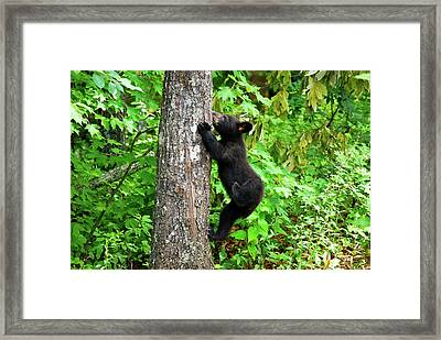 Itchy Baby Framed Print
