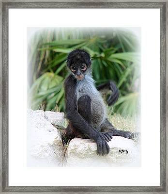 Itchy Belly Framed Print by Patrick Witz