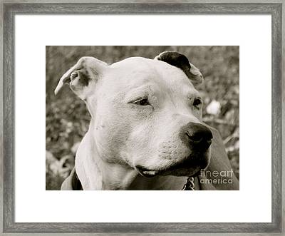 Its A Beautiful Day Framed Print by Q's House of Art ArtandFinePhotography