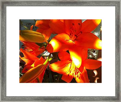 It's A Beautiful Day Lily Framed Print by Stephanie Aarons