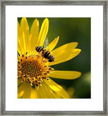 Its A Bees Life IIi Framed Print by Kathi Isserman