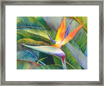 Its A Bird Framed Print by Judy Mercer